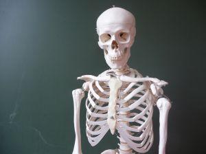 1187803_skeleton_1.jpg