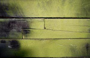 875374_mildewed_wood.jpg