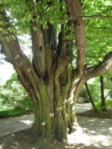 tree-1547504-225x300