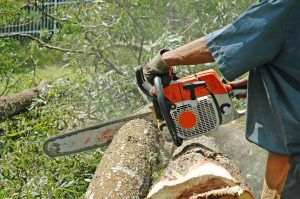 chainsaws-in-action-1-1239327-300x199